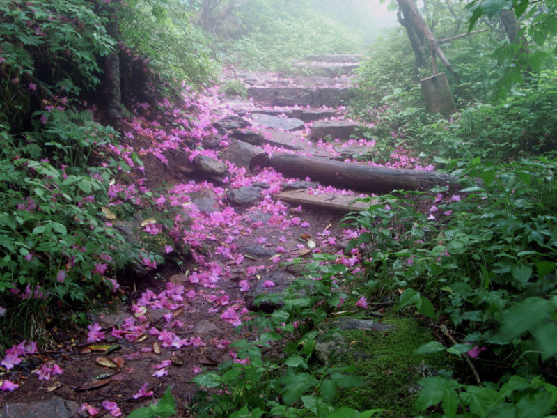 Blue Ridge Parkway: Craggy Gardens