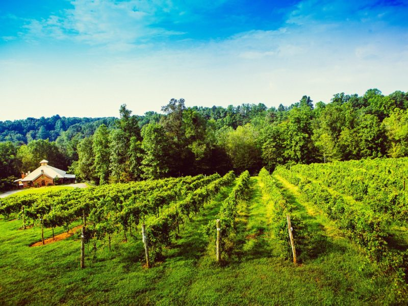 Elkin Creek Vineyard in Surry County