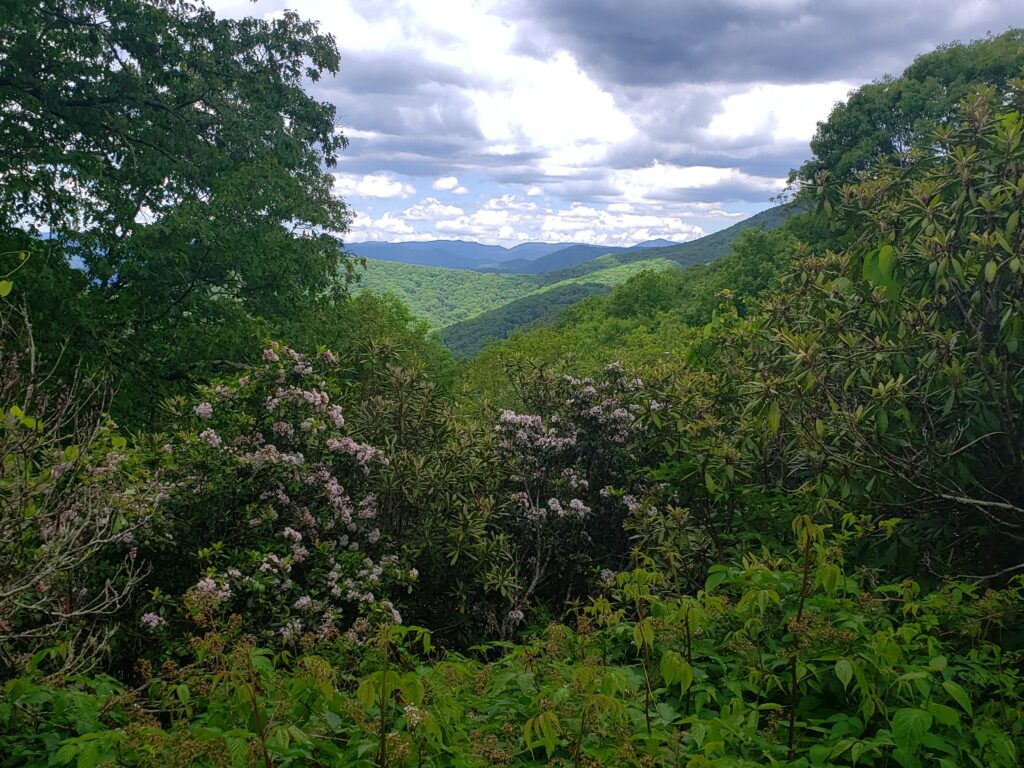 view of distant mountains with mountain laurel blooming in the foreground