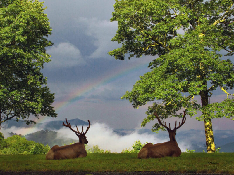 Two elk viewing a rainbow
